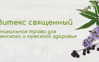 Витекс священный – уникальная трава для женского и мужского здоровья. При каких заболеваниях экстракт растения может помочь? Обзор наиболее популярных добавок на iHerb