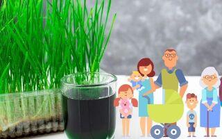 Полезные свойства чудодейственного напитка витграсс. Как приготовить витграсс в домашних условиях