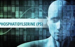 Фосфатидилсерин – важнейшая добавка для поддержания здоровья мозга и нервной системы человека в любом возрасте. В каких продуктах содержится? Выбор добавки на iHerb