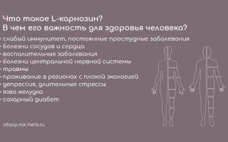 Что такое L-карнозин? В чем его важность для здоровья человека? Зачем комбинируют цинк и L-карнозин?