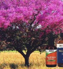Что такое кора муравьиного дерева? В каких случаях уместно применение добавки? Показания, противопоказания и дозировка. Обзор самых популярных средств на сайте iHerb