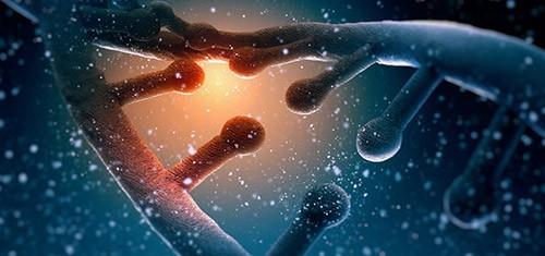 формирование связей в клетках