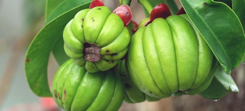 гарциния камбоджийская