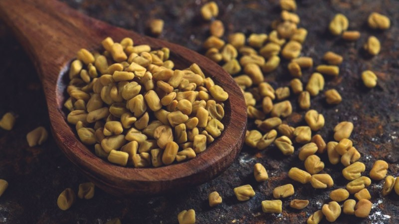 хранение семян пажитника