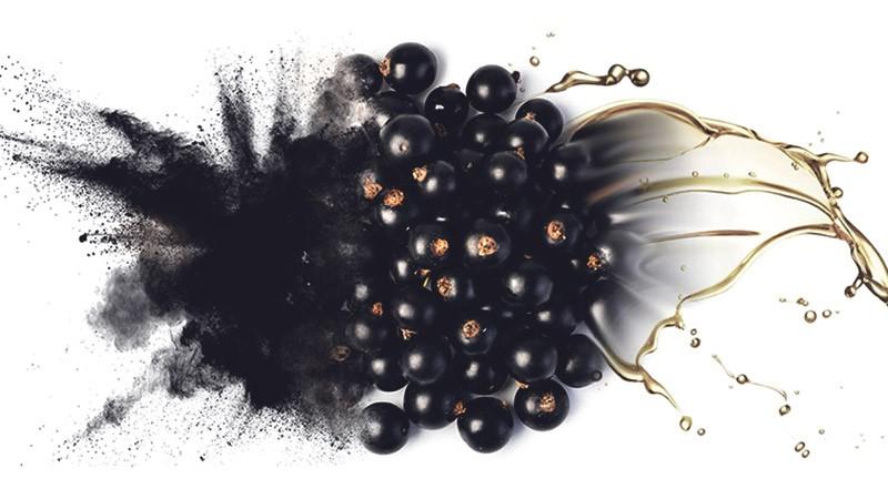 масло черной смородины