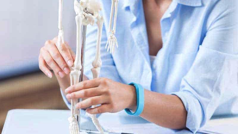 скелет человека макет