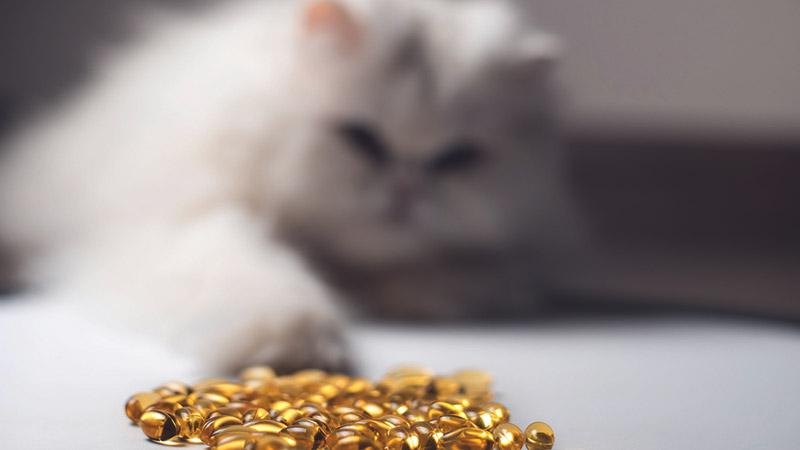 рыбий жир для кошек