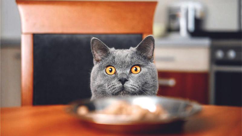 омега 3 для кошек