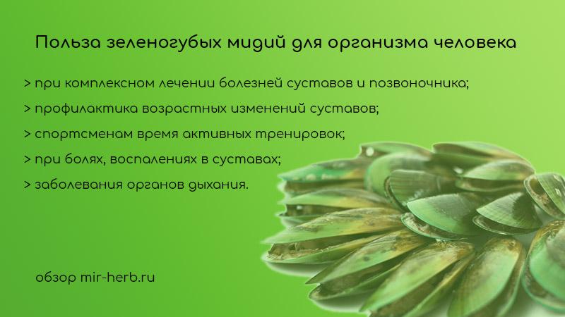 Польза зеленогубых мидий