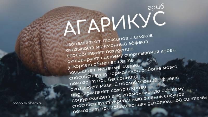 Полезные свойства гриба агарикус для организма человека. Примеры качественных добавок от производителей с мировым именем на основе гриба