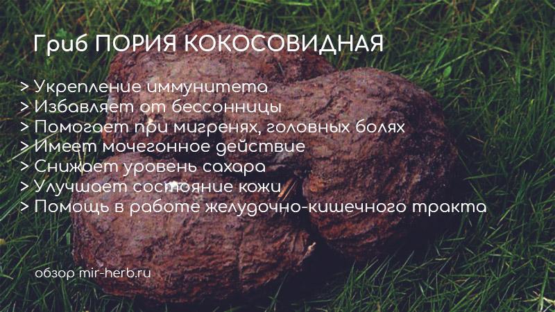 Описание гриба пория кокосовидная. Его полезные свойства для организма детей и взрослых