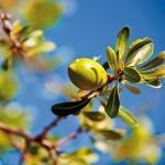 Аргановое масло – волшебное средство вашей красоты