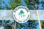 Пикногенол – один из лучших антиоксидантов. Польза и вред, полное описание добавки, показания и противопоказания к применению